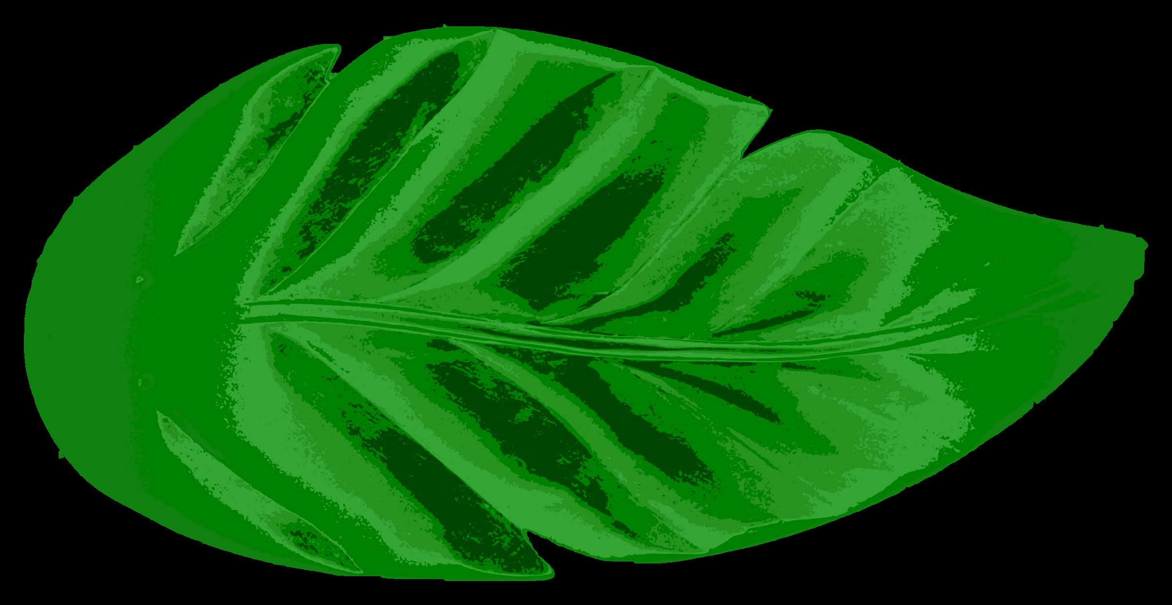 Clipart leaves large leave, Clipart leaves large leave.