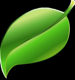 Large leaf clipart.
