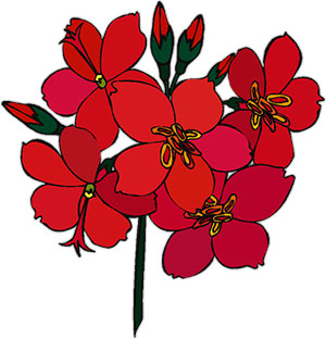 Large red flower clipart - Clipground