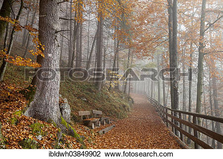 "Stock Photo of ""Fog in an autumn forest, Schonau am Konigsee."