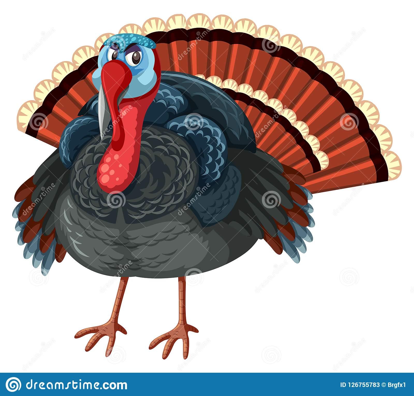 Large Turkey White Background Stock Vector.