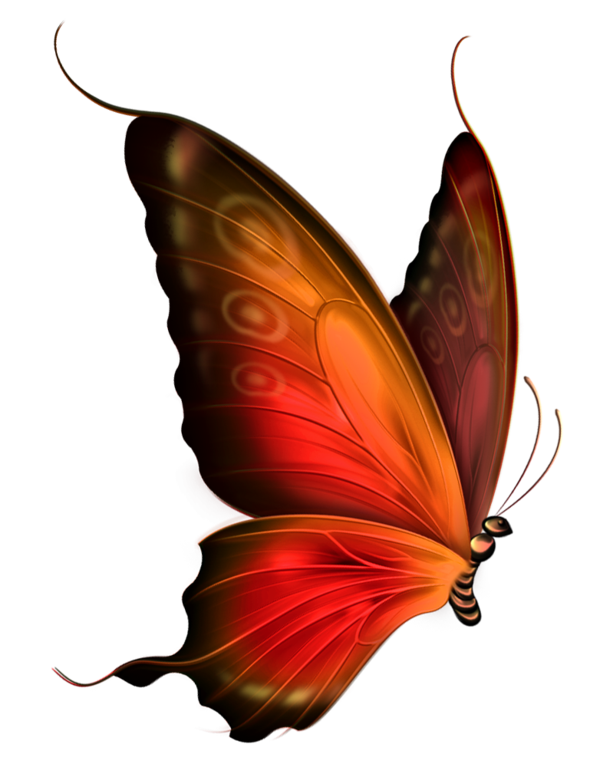 Red and Brown Transparent Butterfly Clipart by zwyklaania on.