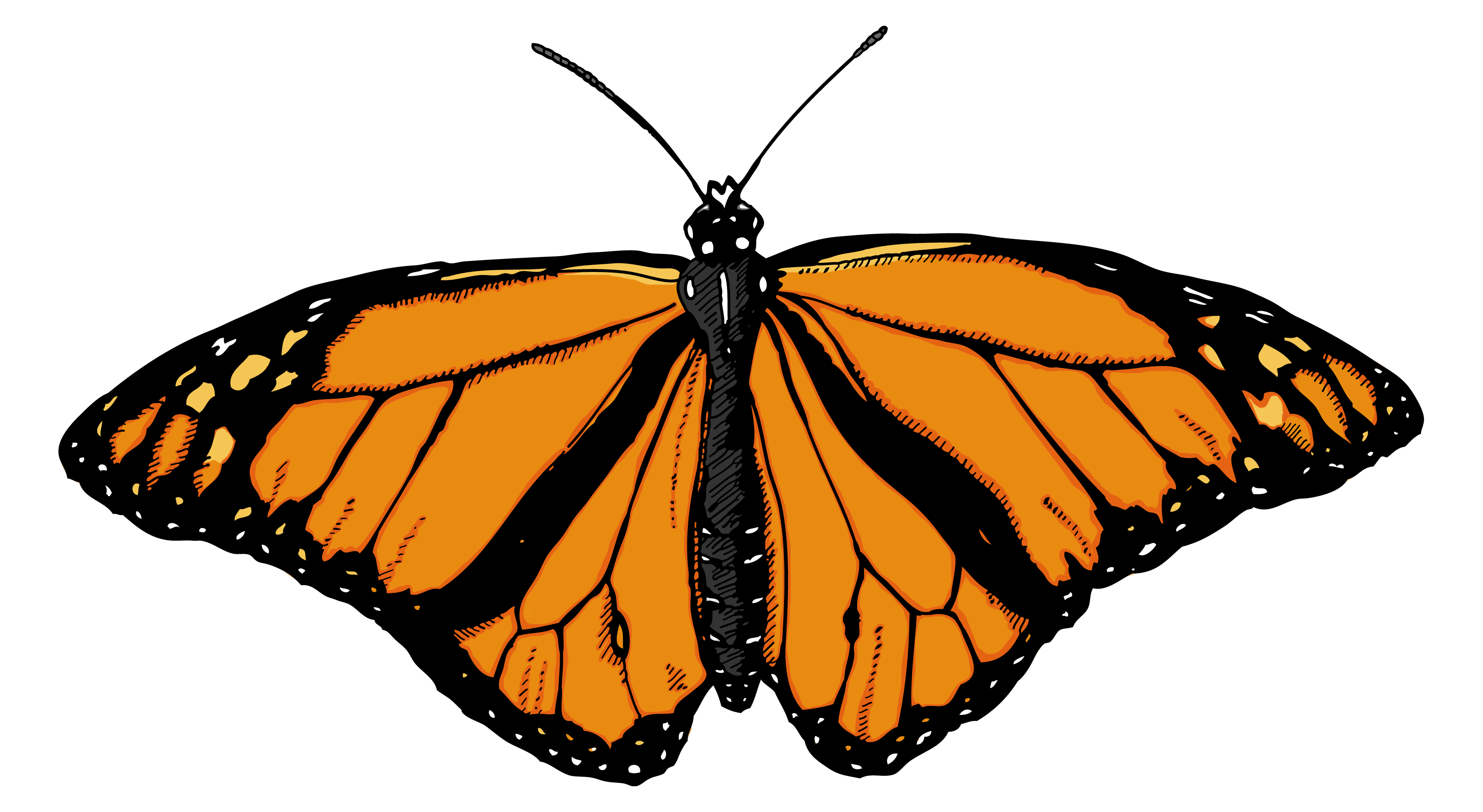 Monarch butterfly pictures the largest free clipart.