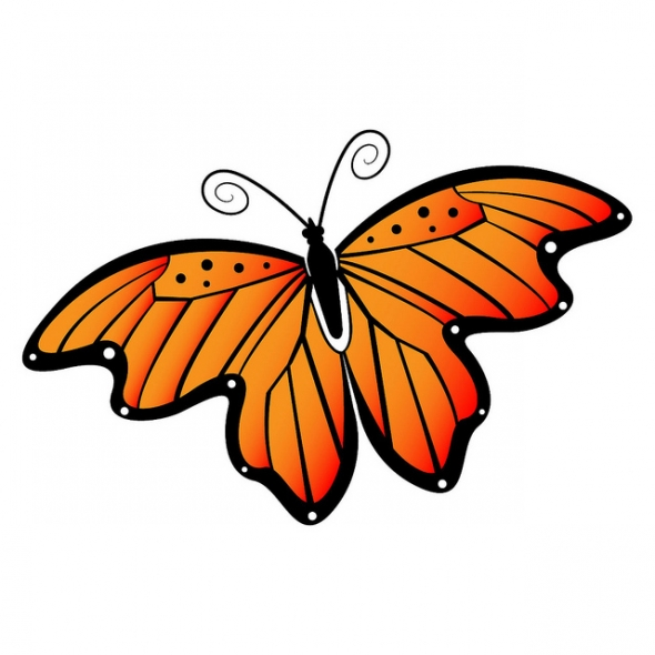 Butterfly Images Free.
