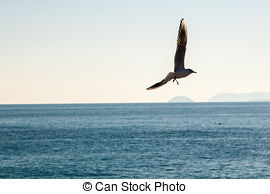 Picture of flying sea birds.
