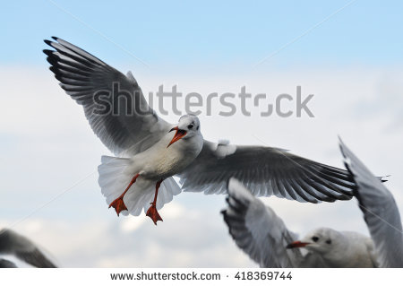 Laridae Stock Photos, Images, & Pictures.