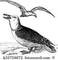 Laridae Clip Art Royalty Free. 10 laridae clipart vector EPS.