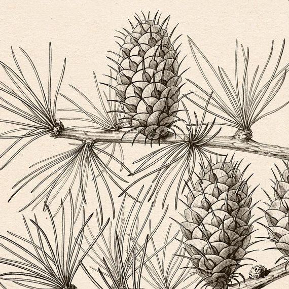 Botanical prints, Botanical chart, Botanical printable, Printable.