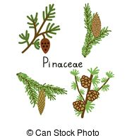 Larix Vector Clip Art Royalty Free. 6 Larix clipart vector EPS.