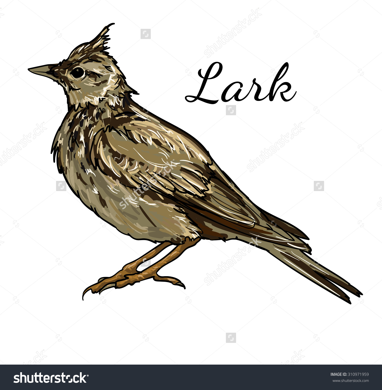 Lark Bird Realistic Vector Illustration Stock Vector 310971959.