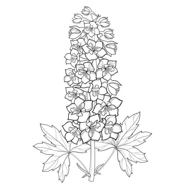 Larkspur Flower Illustrations, Royalty.