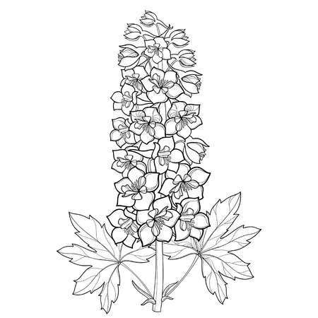112 Larkspur Stock Illustrations, Cliparts And Royalty Free.