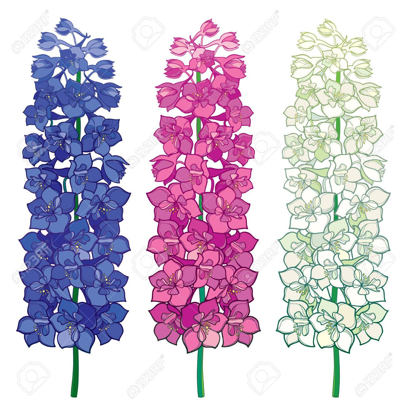 Set with Delphinium or Larkspur. Bunch with flower in blue, pink...