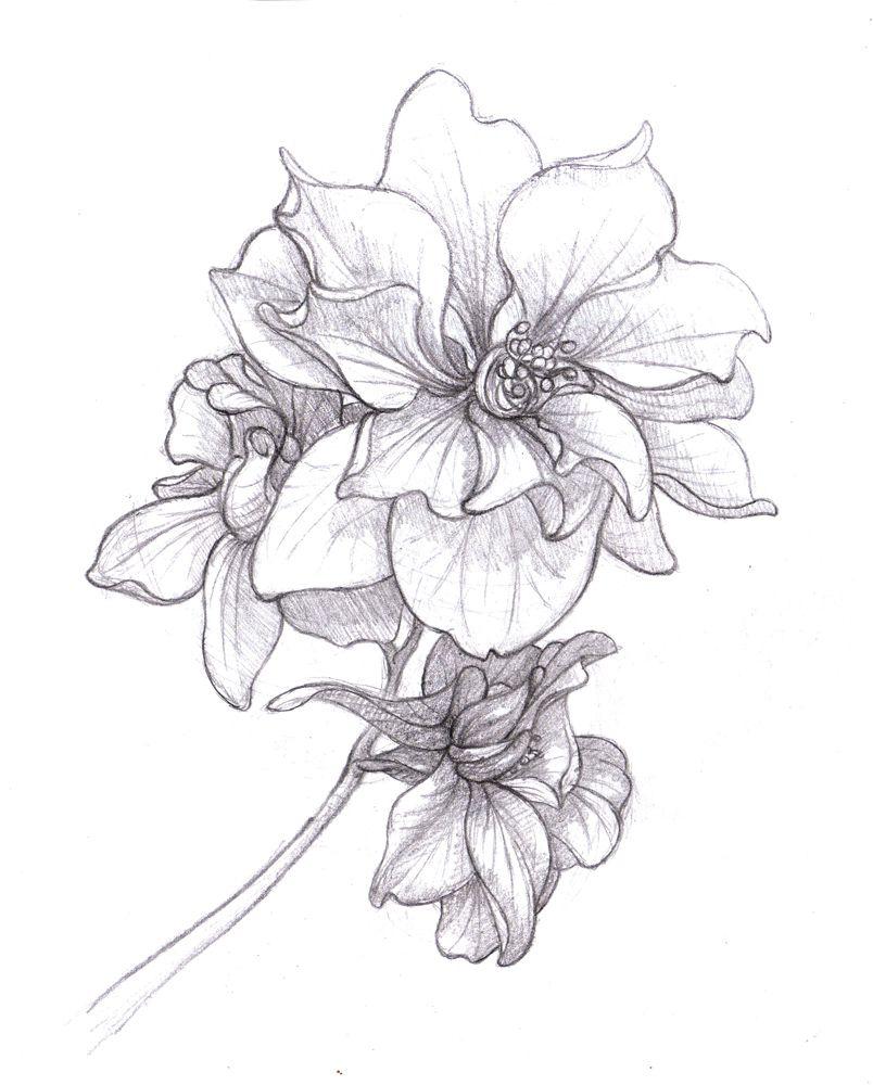 larkspur drawing July birth flower.