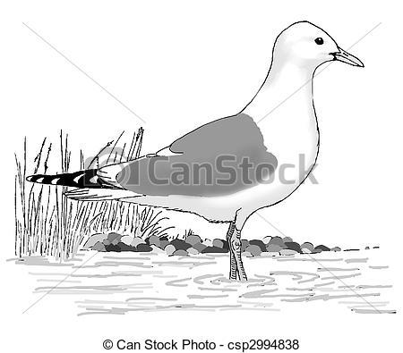 Stock Illustration of Mew Gull.