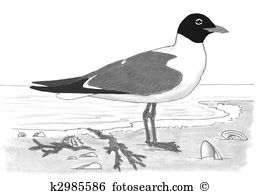 Larus Illustrations and Clipart. 41 larus royalty free.