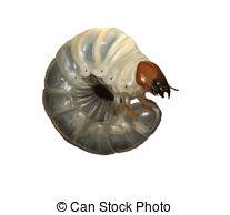 Larvae Illustrations and Clip Art. 460 Larvae royalty free.