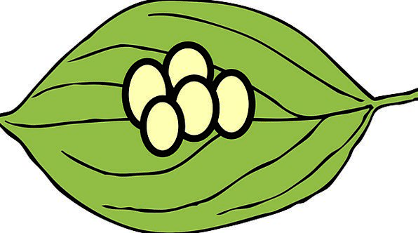 Butterfly larvae on leaf clipart.