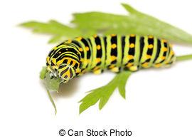 Butterfly larva Stock Illustrations. 330 Butterfly larva clip art.