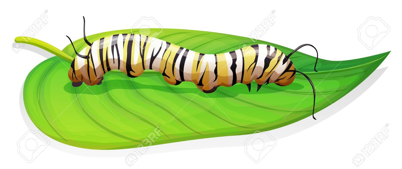 Illustration Of The Monarch Butterfly Larva Stage Royalty Free.