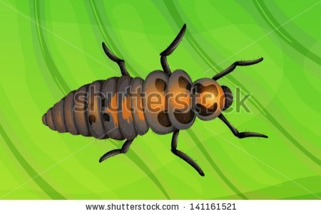 """ladybird_larva"" Stock Photos, Royalty."