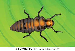 Larval stage Clipart and Illustration. 18 larval stage clip art.