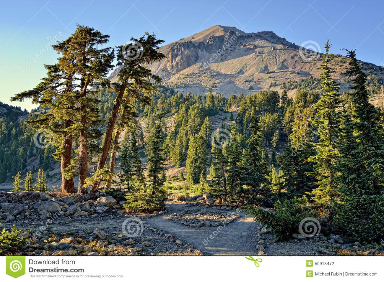Cedar Trees And Lassen Peak, Lassen Volcanic National Park Stock.