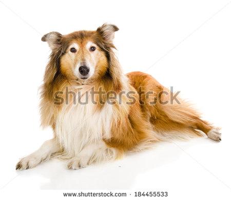Lassie Clipart #1.