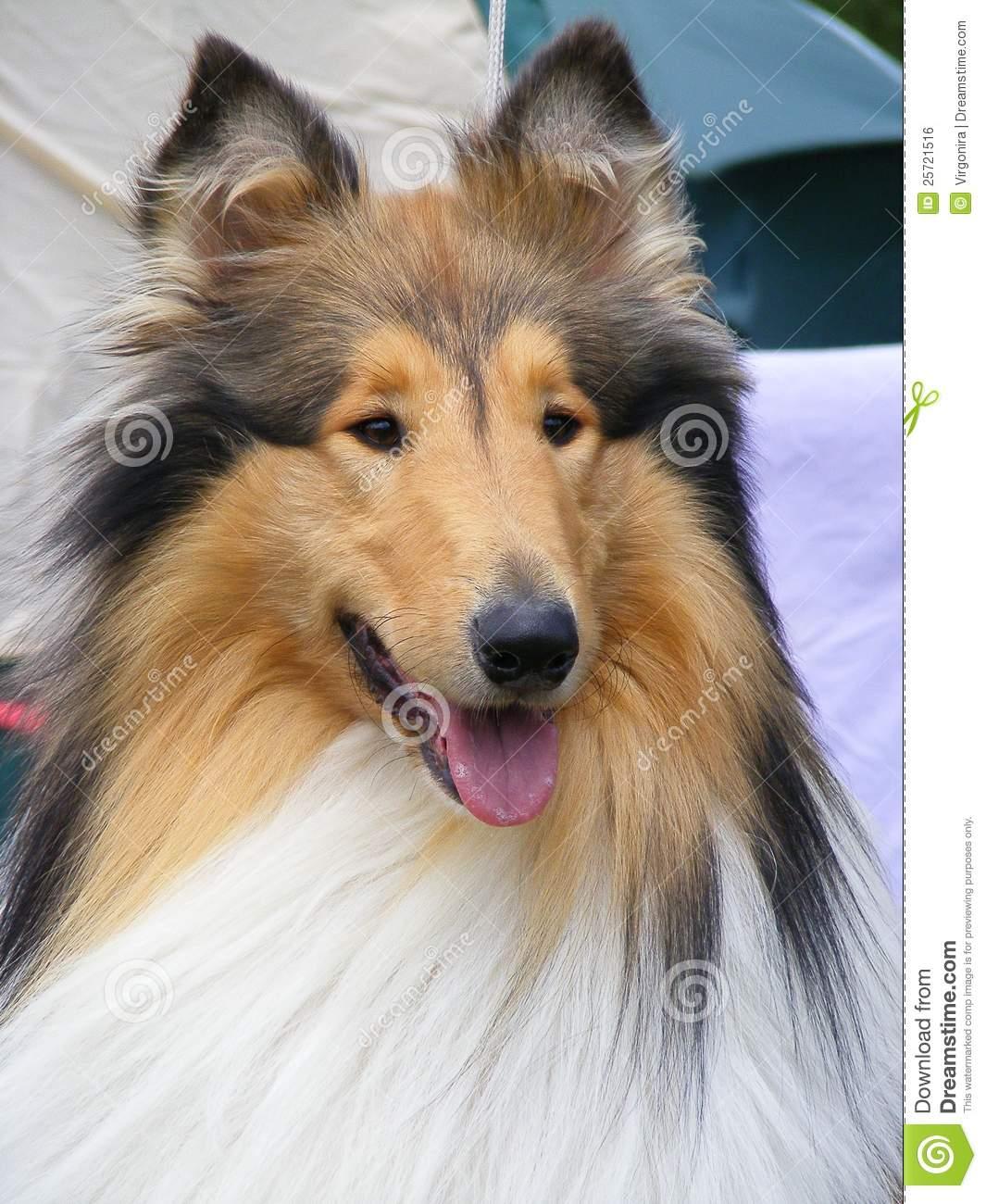 Lassie Clipart #137.