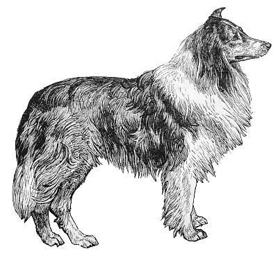 136 Lassie Clipart.