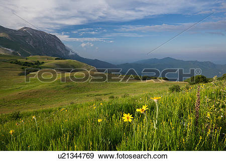 Stock Photograph of View of yellow wild coreopsis flowers in Piano.