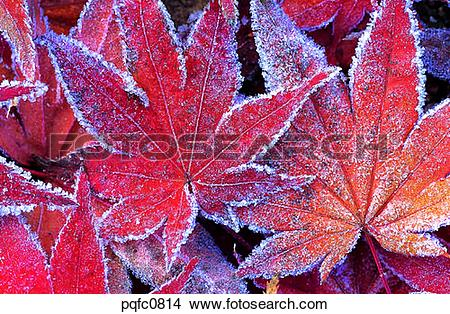 Stock Photo of late autumn, fall, day, fallen leaves, leaf, late.