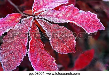 Stock Photo of late autumn, fall, leaf, twig, branch, late fall.