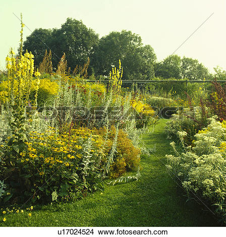 Stock Photo of Grass path and yellow flower borders in country.