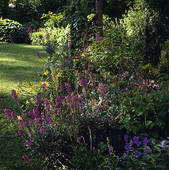 Stock Image of Late summer border in country garden u30809615.
