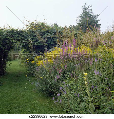 Stock Photo of Border of flowering plants in country garden in.