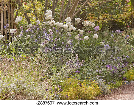 Picture of Late Summer Casual Flower Garden Scene k2887697.