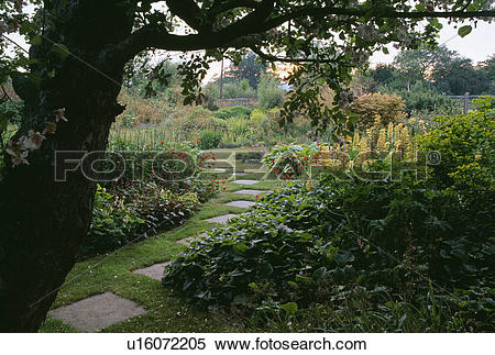 Stock Image of Tree above paving stones in grass path through.