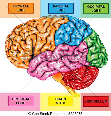 Brain Illustrations and Clip Art. 60,582 Brain royalty free.