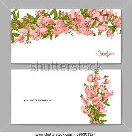 Lathyrus Odoratus Stock Images, Royalty.