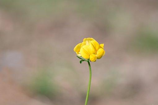 Art, Flower.