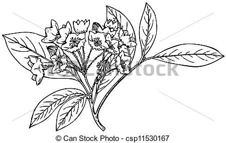 Clip Art Vector of Plant Kalmia latifolia.