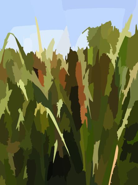 Typha Latifolia Habitus Clip Art at Clker.com.