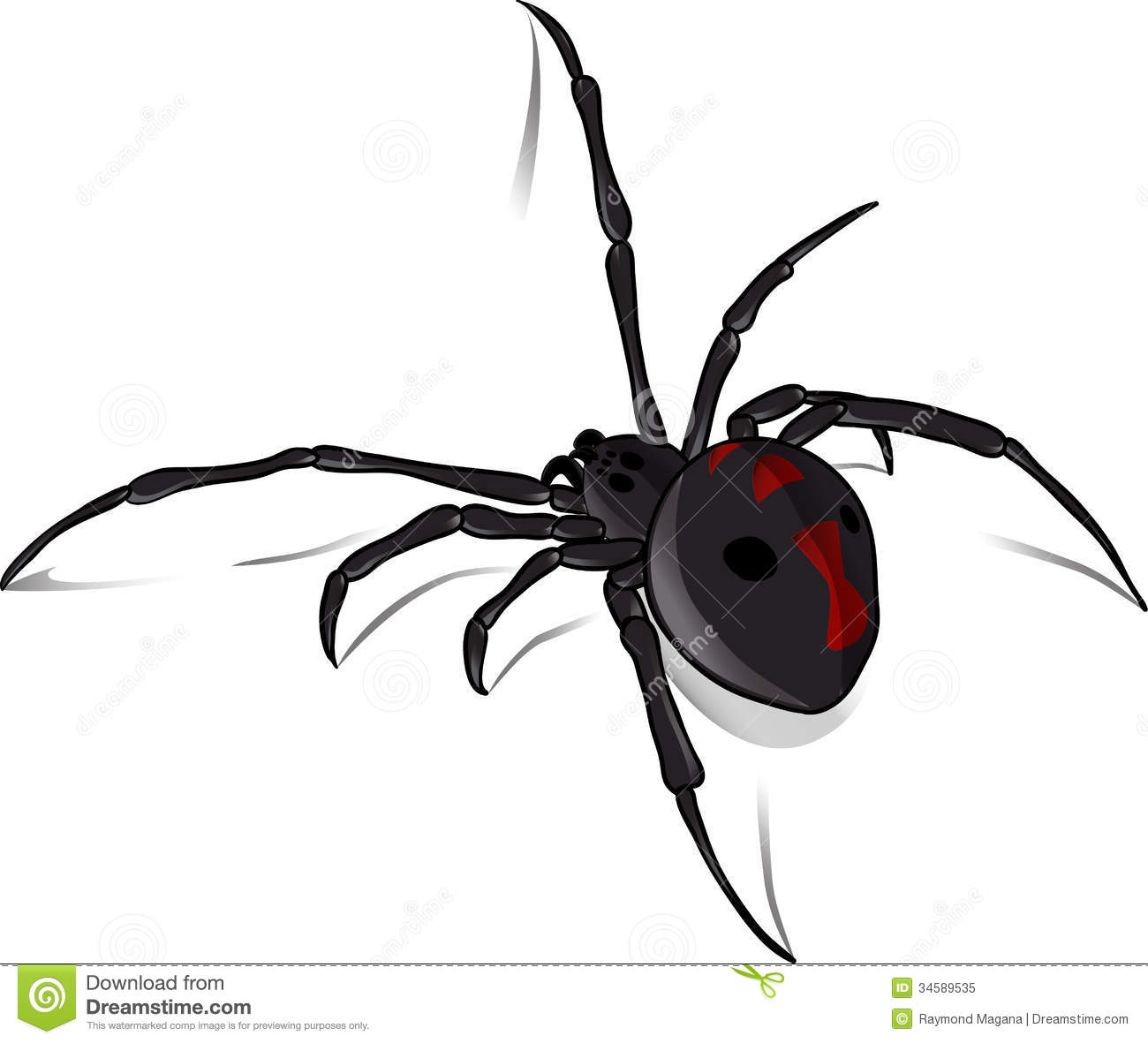 Latrodectus Stock Illustrations.