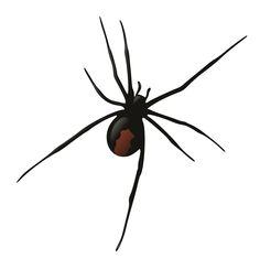 black widow spider on Pinterest.