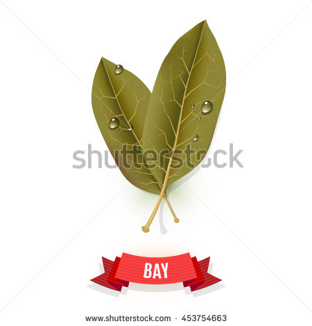 Lauraceae Stock Vectors & Vector Clip Art.