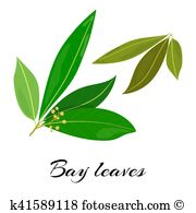 Lauraceae Clip Art and Illustration. 14 lauraceae clipart vector.