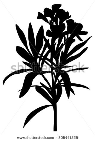 Oleander Isolated Stock Photos, Royalty.
