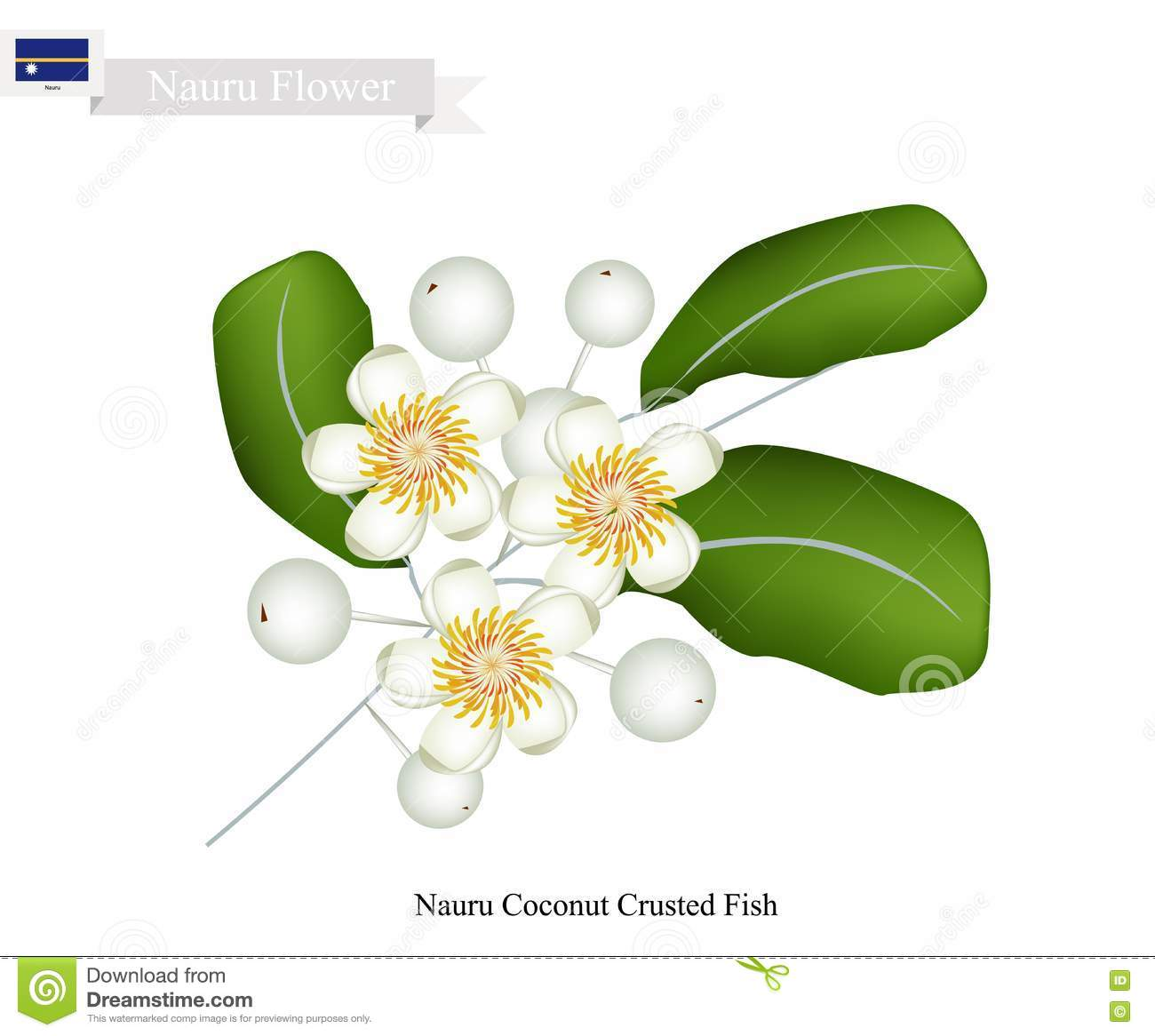 Calophyllum Inophyllum, A Common Flower In Nauru Stock Vector.