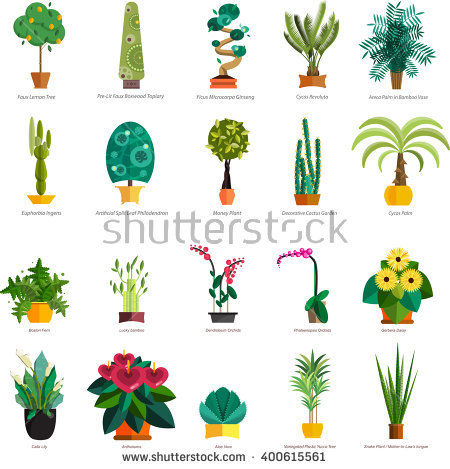 Plant Stock Photos, Royalty.
